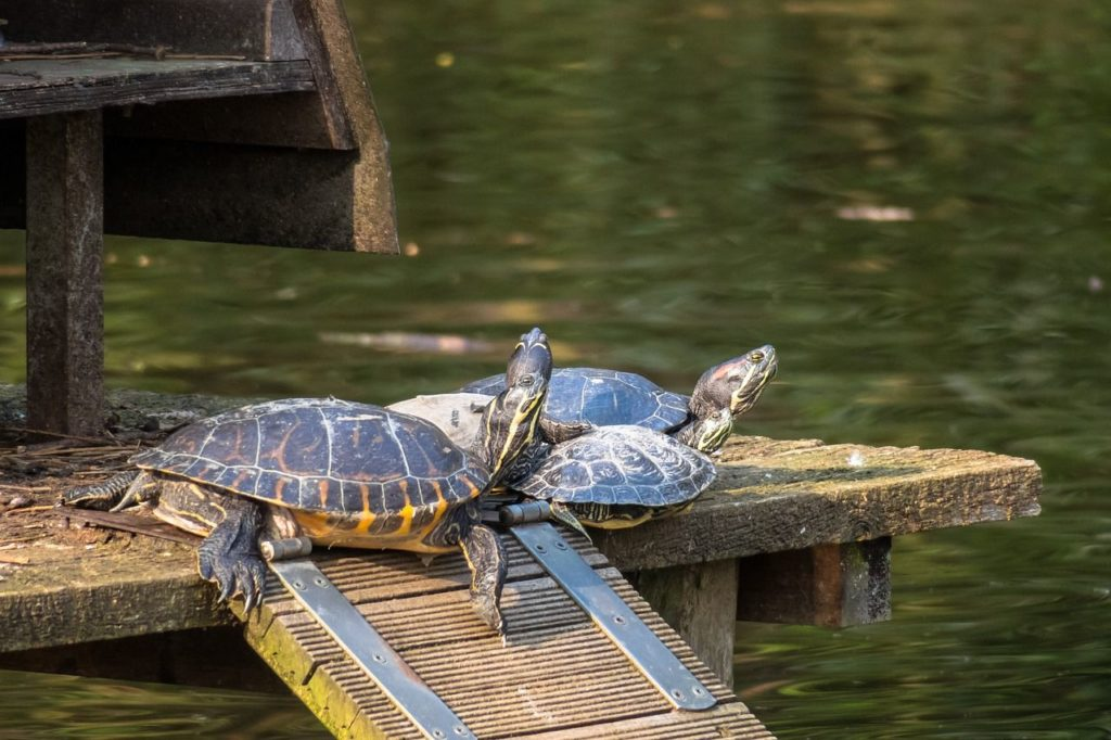 how to build a basking area for turtles