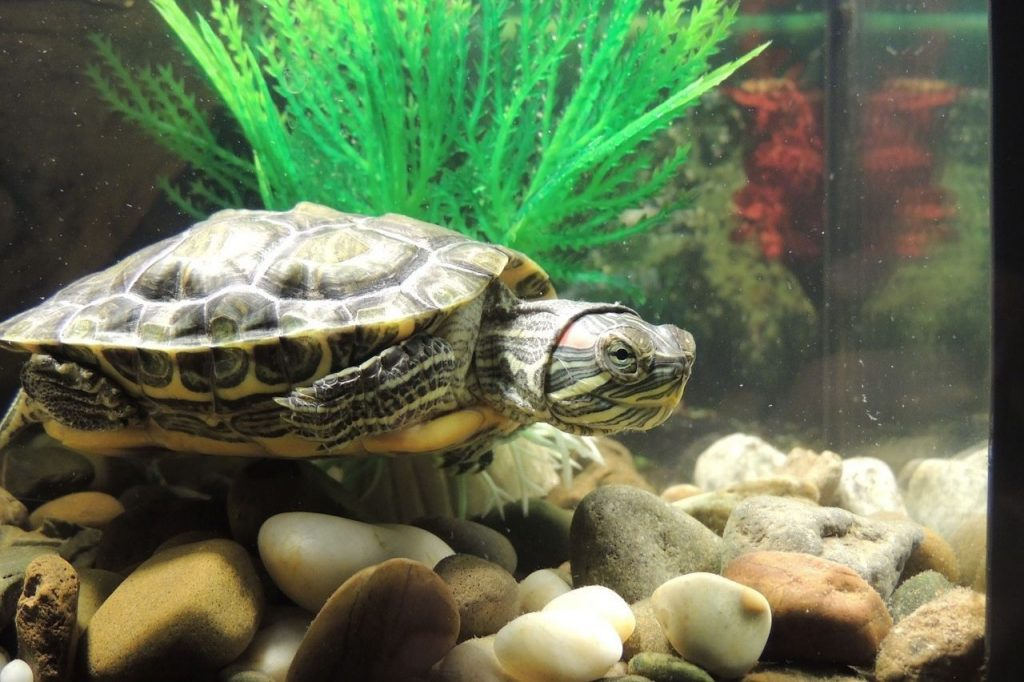 turtle aquarium decor