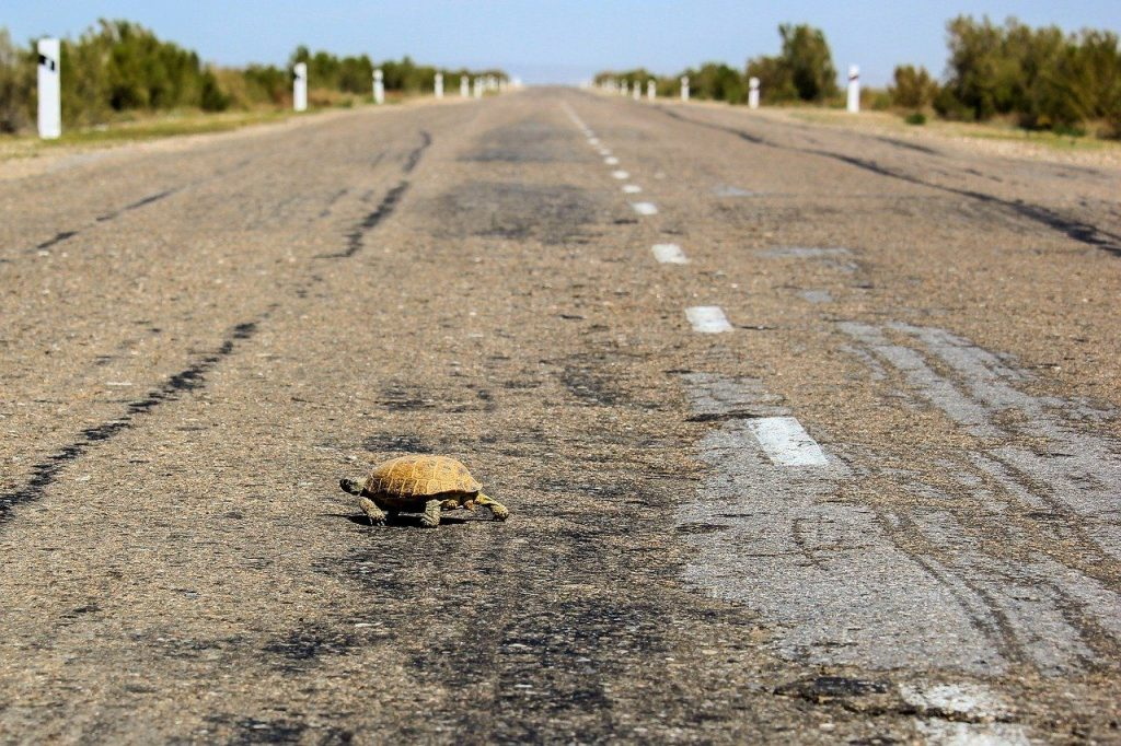 how fast can a turtle run