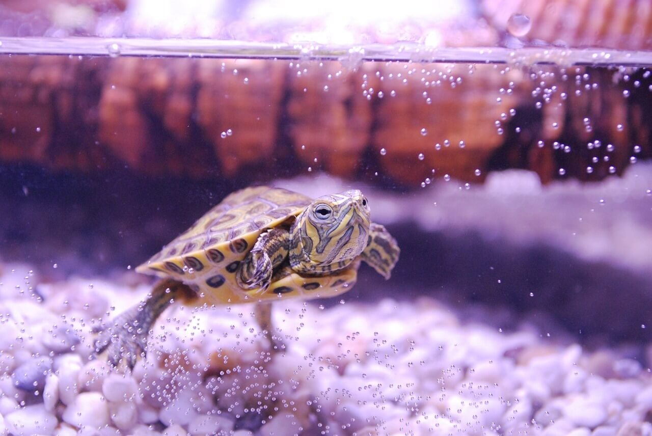 how to keep a turtle tank clean