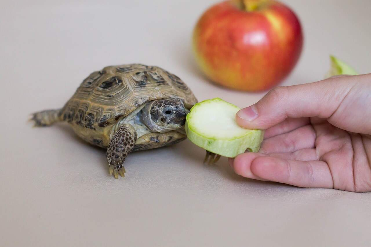 why is my turtle not eating