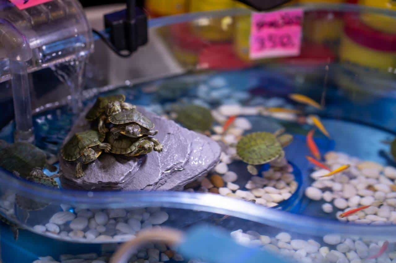 what fish can live with red eared slider turtles