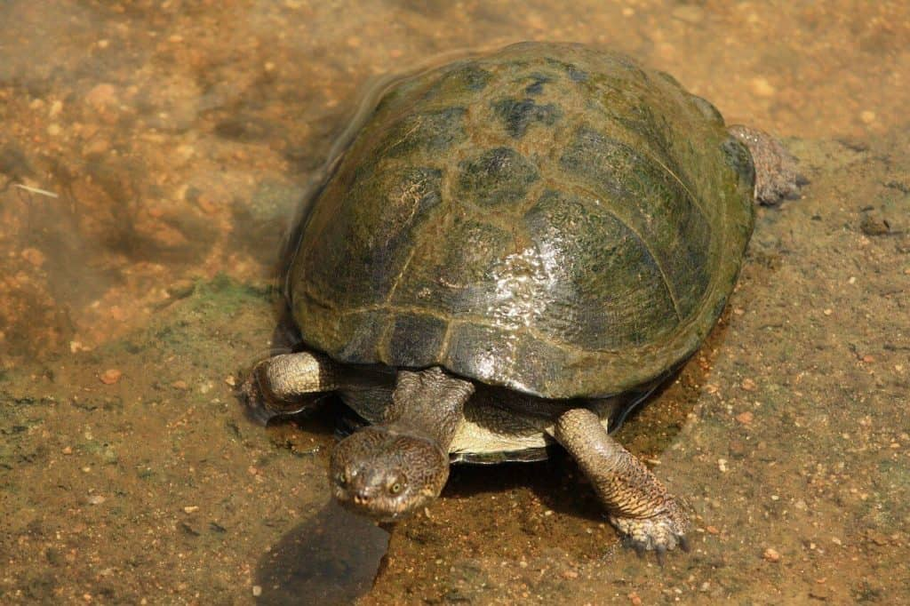 how to clean algae off turtle shell